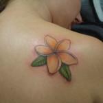 Plumeria Tattoo 11 150x150 - 100's of Plumeria Tattoo Design Ideas Pictures Gallery