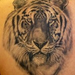 Tiger Tribal Tattoo1 150x150 - 100's of Tiger Tribal Tattoo Design Ideas Pictures Gallery