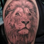 Lion Tattoos 12 150x150 - Lion Tattoos Design Ideas Pictures Gallery