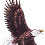 eagle tattoo 3 150x150 - Eagle Tattoos Design Ideas Pictures Gallery