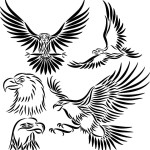 eagle tattoo 7 150x150 - Eagle Tattoos Design Ideas Pictures Gallery