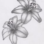 lilly tattoos 6 150x150 - Lilly Tattoos Design Ideas Pictures Gallery