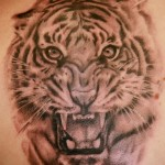 tiger tattoos (9)