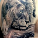 Lion Tattoos 8 150x150 - 100's of Lion Tattoo Design Ideas Picture Gallery