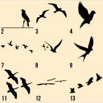tumblr lyy8i6VClG1r33i94 150x150 - 100's of Birds Tattoo Design Ideas Picture Gallery